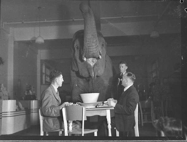 elefantenteeparty