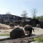 Elefanten im Kölner Zoo.