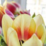 Hach, Tulpen!